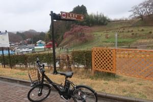 ⑱三春滝桜