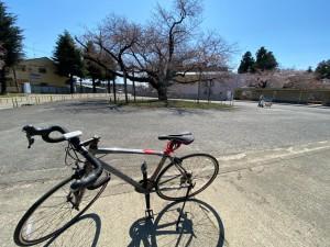0403日大の桜_200403_0003