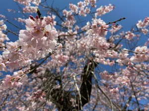 0403田村神社_200403_0007