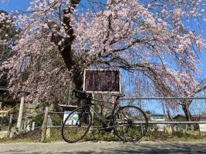 0403田村神社_200403_0021