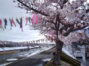 20190411須賀川市釈迦堂川桜_190411_0002